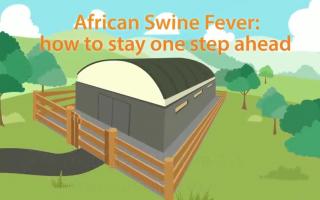 รู้จักโรคอหิวาต์แอฟริกาในสุกร